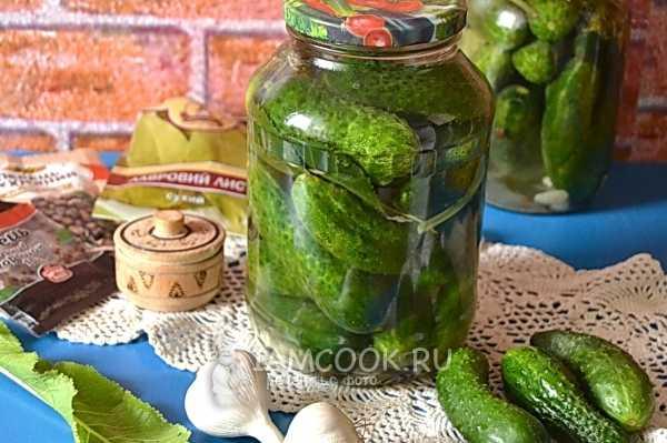 Огурцы на зиму соленые: рецепт холодным и горячим способом