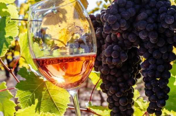 Как приготовить вино из винограда в домашних условиях по простому рецепту