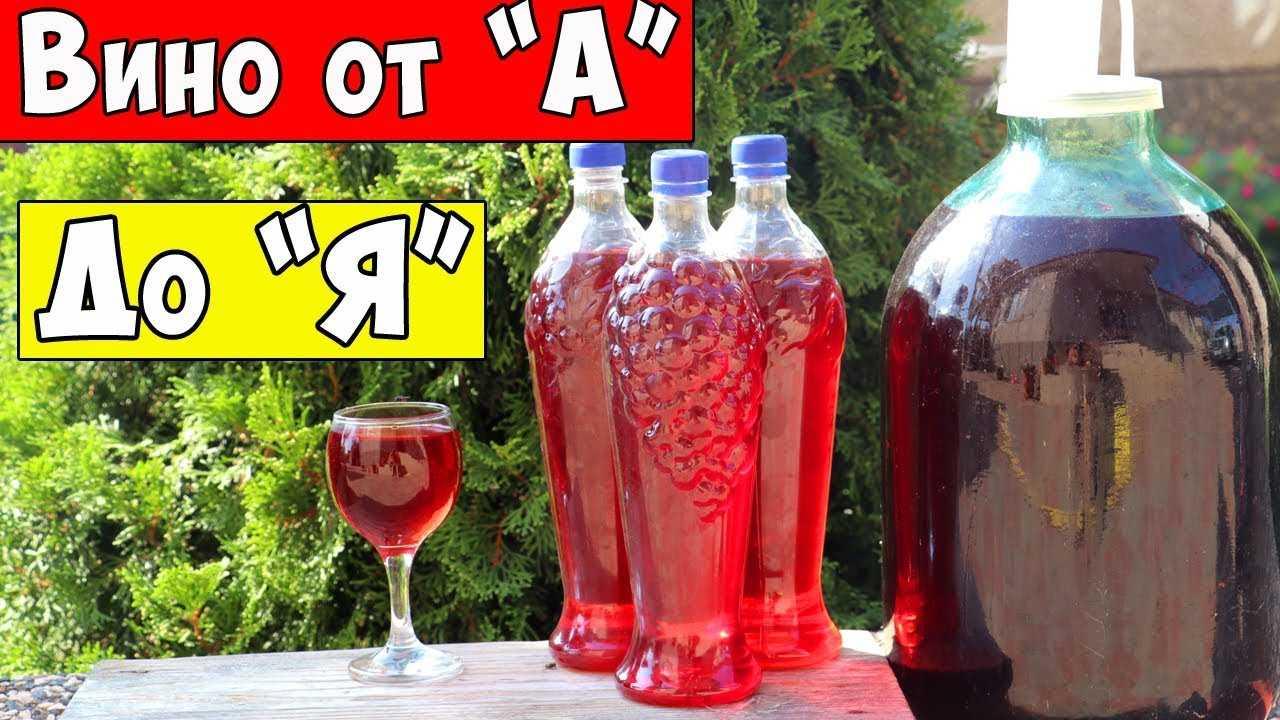 Топ-3 рецепта - домашнее вино из винограда изабелла - krrot.net