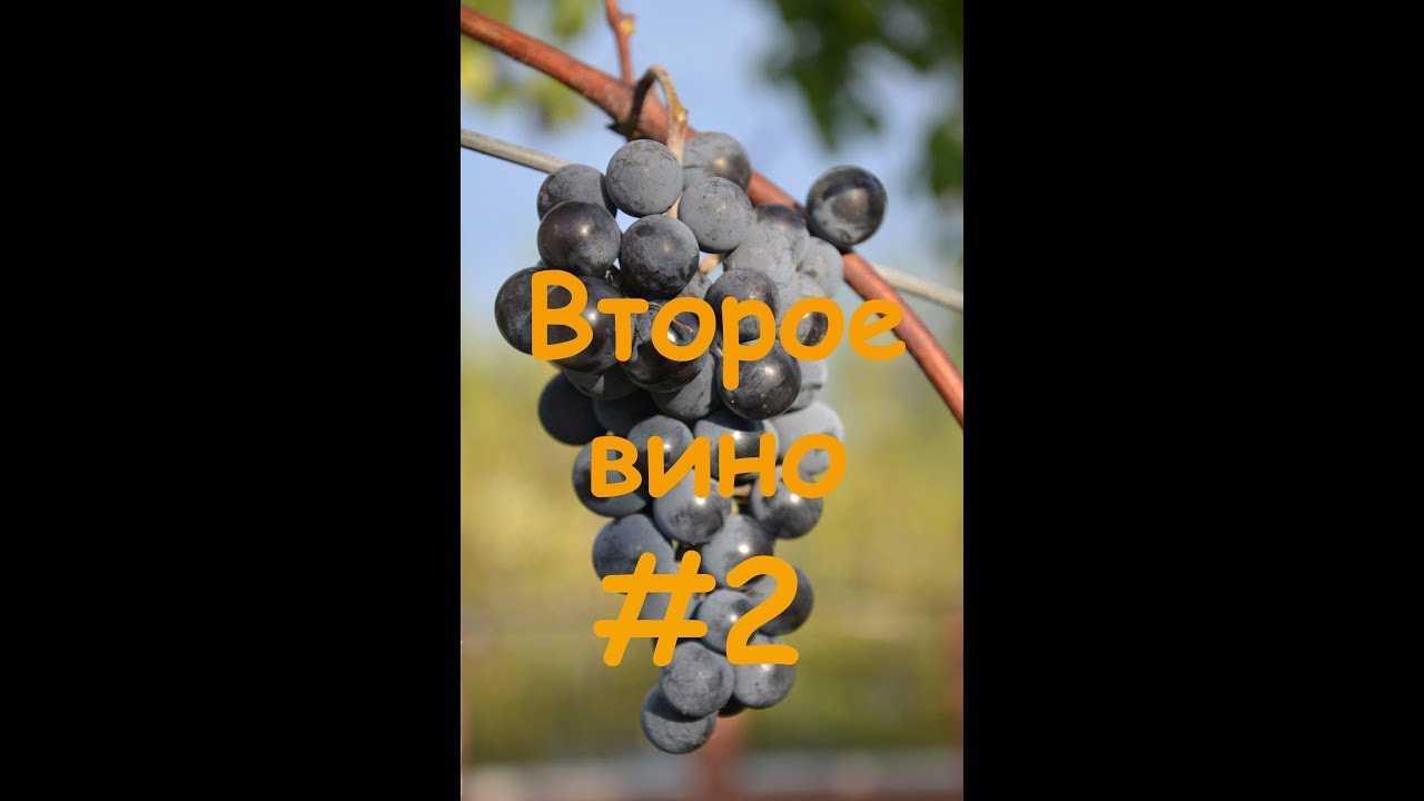 Вторичное вино из жмыха (мезги)