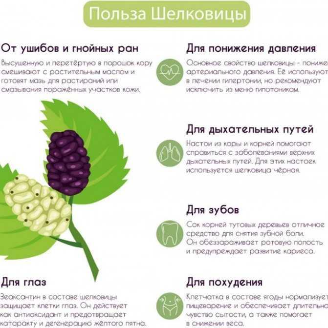 Тутовый дошаб: лечебные свойства, применение в народной медицине