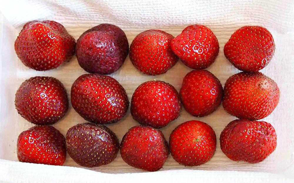 Как заморозить черешню на зиму в морозилке: 5 способов заморозки ягод в домашних условиях » сусеки
