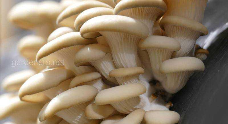 Cушёные белые грибы: рецепты как готовить и сколько варить