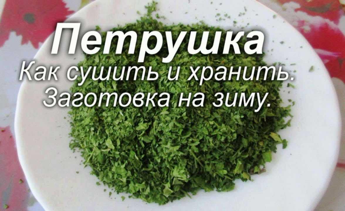 Сушеная петрушка: как заготовить на зиму в домашних условиях, каковы ее состав, полезные свойства и калорийность, а также действующие гост и ту на этот продукт русский фермер