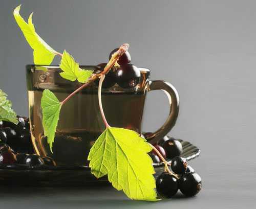 Заготовка листьев смородины для чая