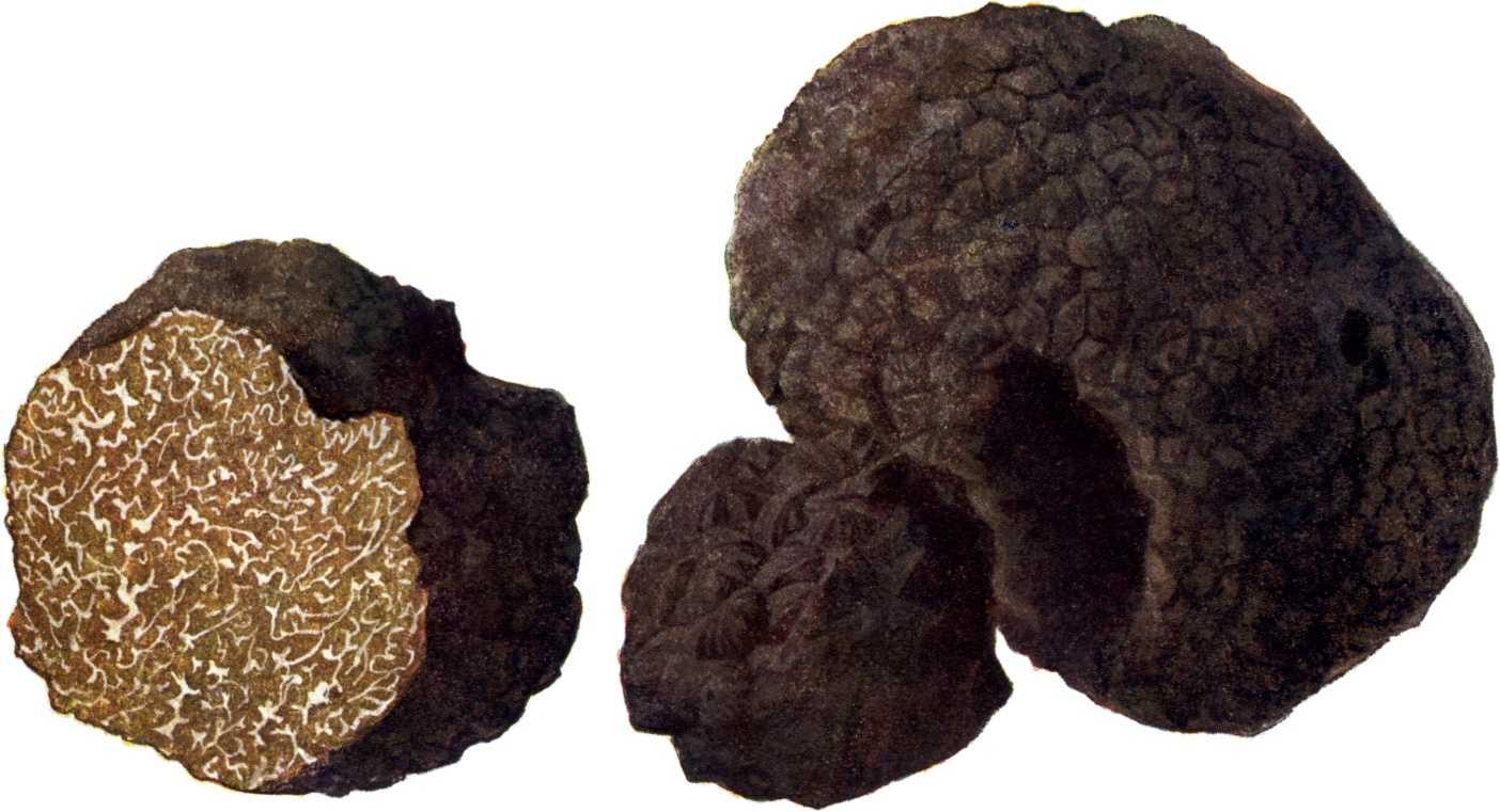 Легендарные конфеты «трюфель» своими руками: 6 проверенных рецептов