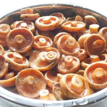 Грибы рыжики на зиму — рецепты приготовления в банках, горячим и холодным способом