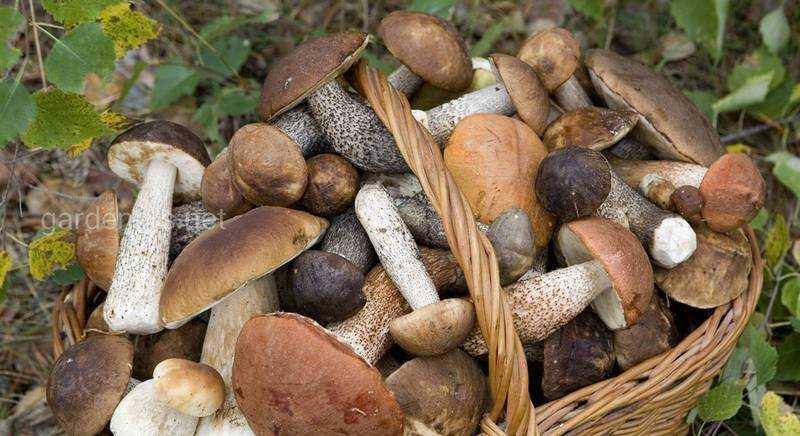 Как нужно готовить сушеные грибы