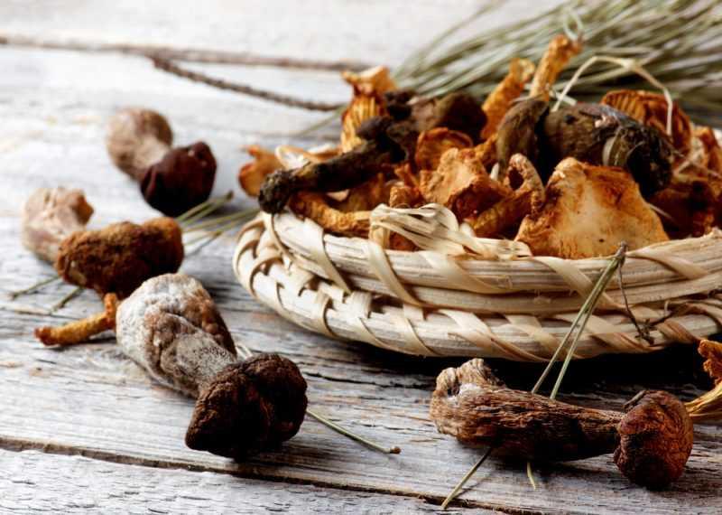 сколько времени нужно сушить грибы в электросушилке