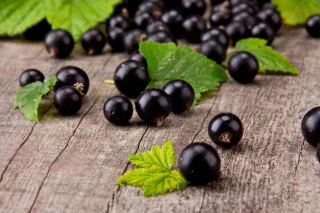 Рецепт самогона на черной смородине: полезные свойства и противопоказания. Как приготовить, различные рецепты: на ягодах, на почках, на веточках.