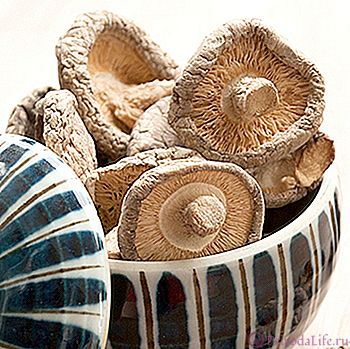 Как правильно сушить грибы на зиму в домашних условиях в духовке, в электросушилке, на нитке, в аэрогриле, в микроволновке.