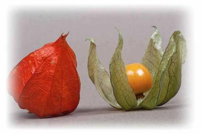 Салат из овощного физалиса на зиму. рецепты блюд из физалиса овощного | дачная жизнь