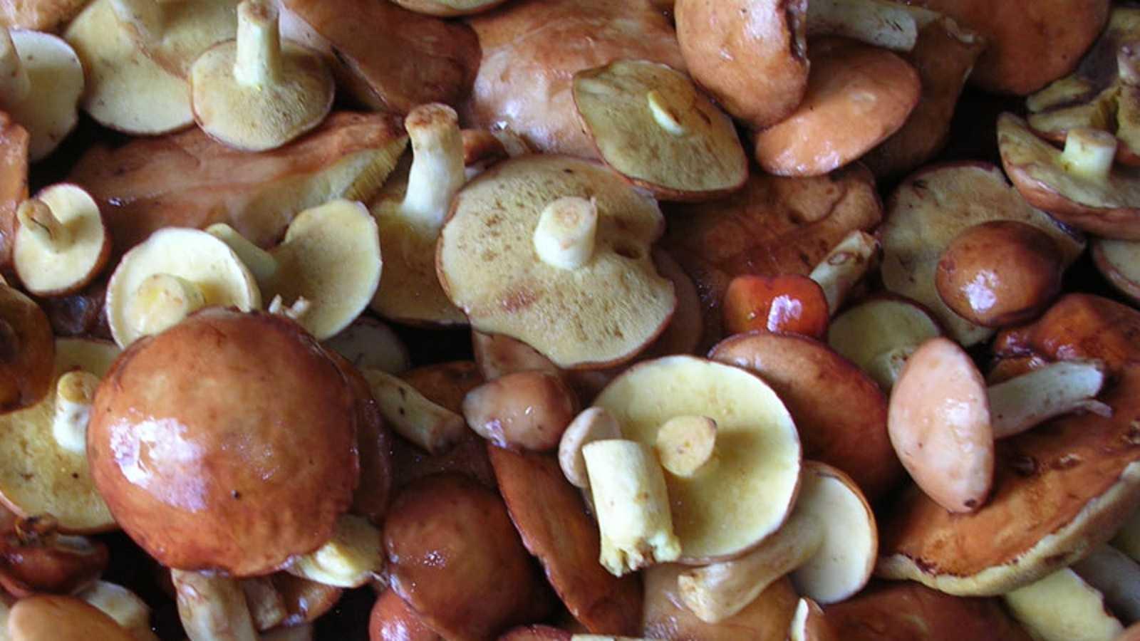 Как сушить грибы: 6 способов в домашних условиях