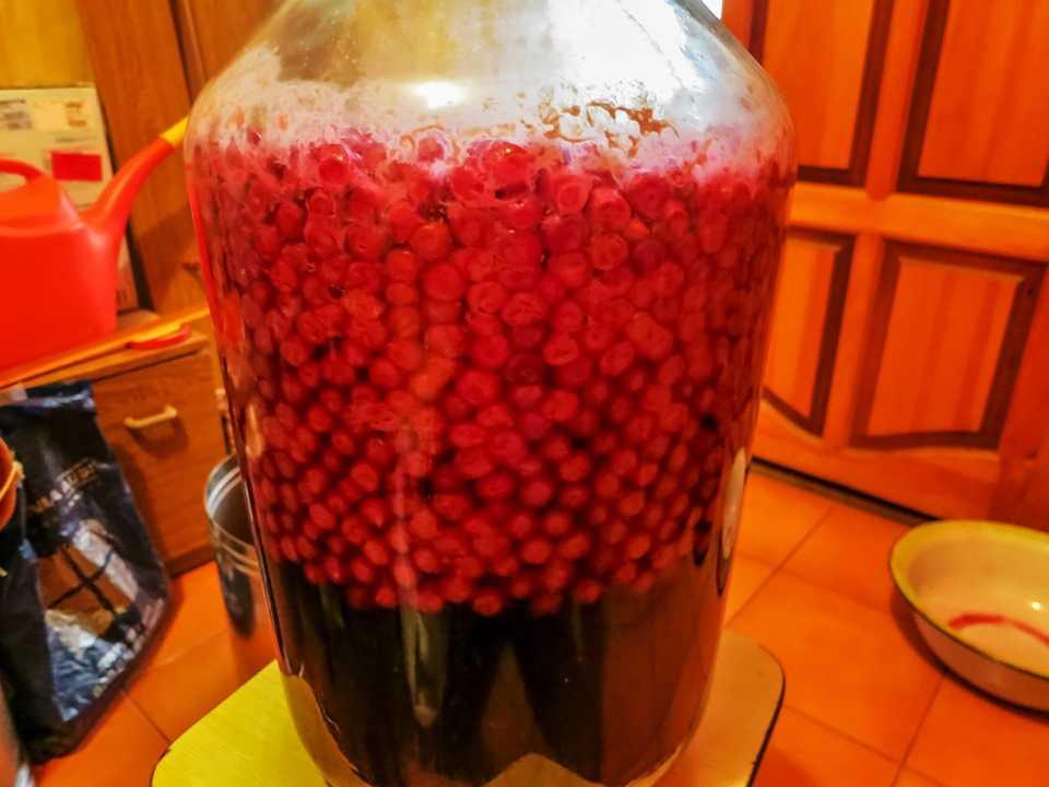 Как просто сделать домашнее вино из вишни: пошаговые рецепты крепленого и сухого вина из вишни с косточкой и без. видео как приготовить домашнее вишневое вино | qulady