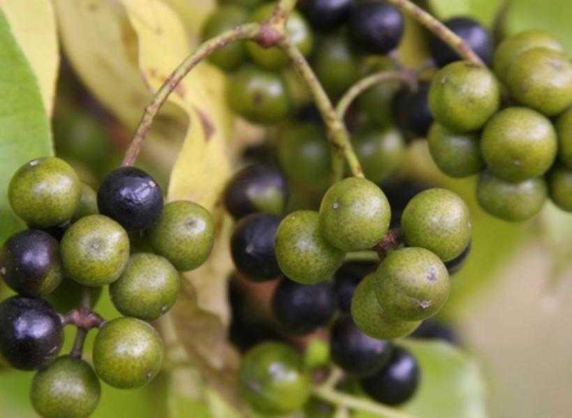 Варенье из черноплодной рябины: простые рецепты на зиму