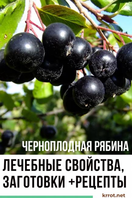 Заготовки из черноплодной рябины на зиму:20 рецептов приготовления, хранение