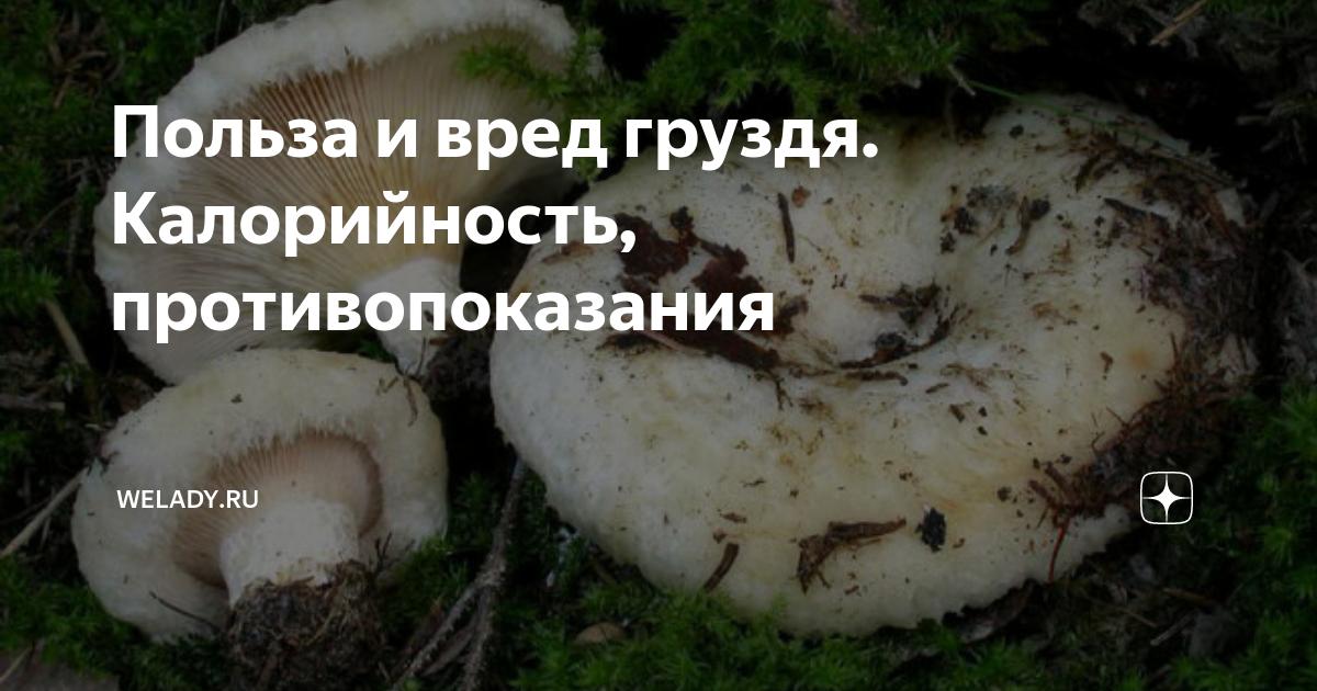 Рецепты из груздей, 87 рецептов, фото-рецепты, страница 2 / готовим.ру