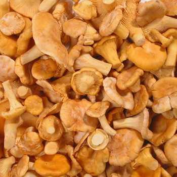 Как заморозить лисички на зиму в морозилке домашних условиях Способы заготовки сырых отварных и жареных грибов а также вариант приготовления замороженных бульонных кубиков