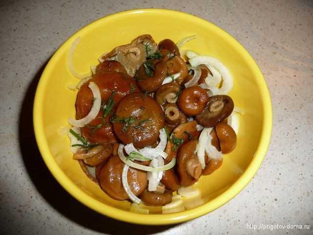 Вкуснейшие рецепты: как готовить грибы рыжики