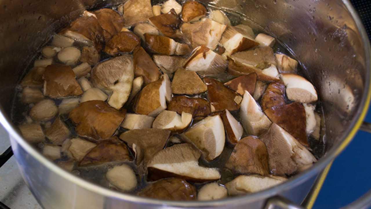 Размороженные грибы сроки хранения