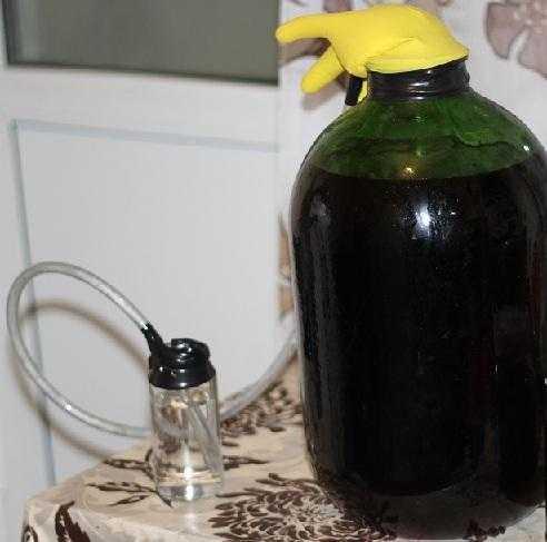 Вино из черемухи в домашних условиях простой рецепт как приготовить