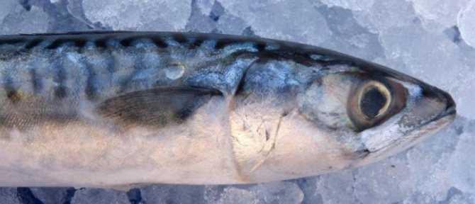 Копченая рыба в вакуумной упаковке сколько хранится. pravilnohranuedy.ru