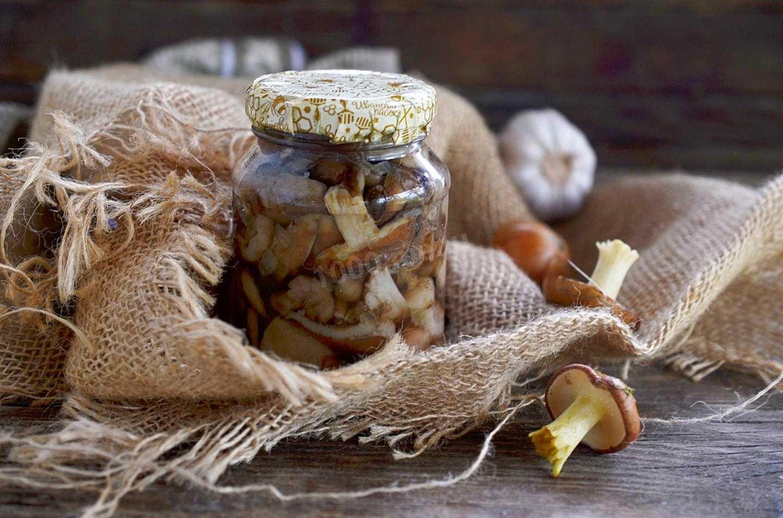 Жареные вешенки на зиму: правила подготовки и приготовления. Лучшие рецепты грибов в банках. Условия и срок хранения заготовок.
