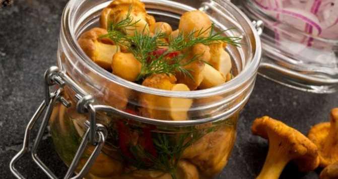 Грибы лисички и рецепты приготовления их на зиму