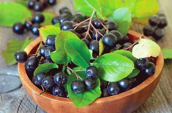 Черноплодная рябина на зиму: лучшие рецепты заготовок с фото