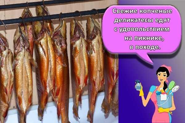 Копченая форель: как коптить, рецепты холодного или горячего копчения, калорийность | berlogakarelia.ru