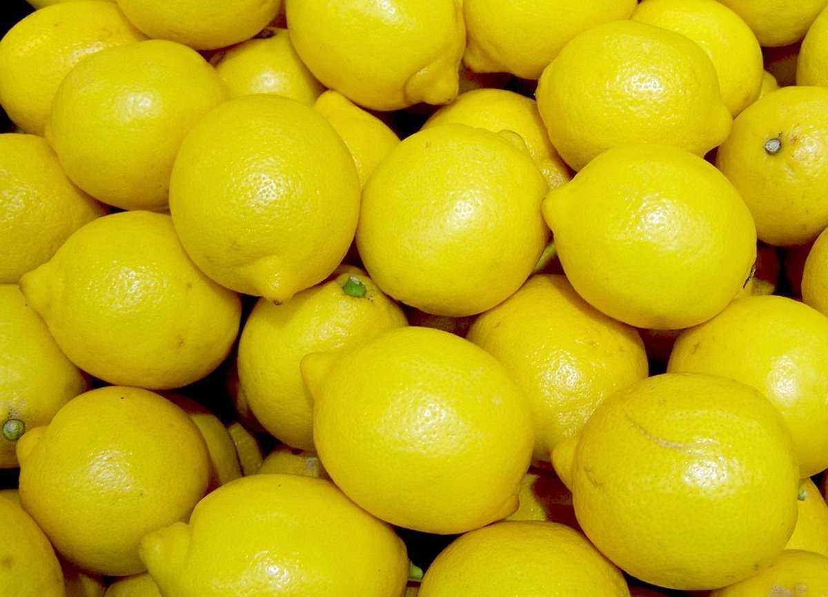 Как хранить лимоны в домашних условиях, чтобы не испортились: 13 лучших способов