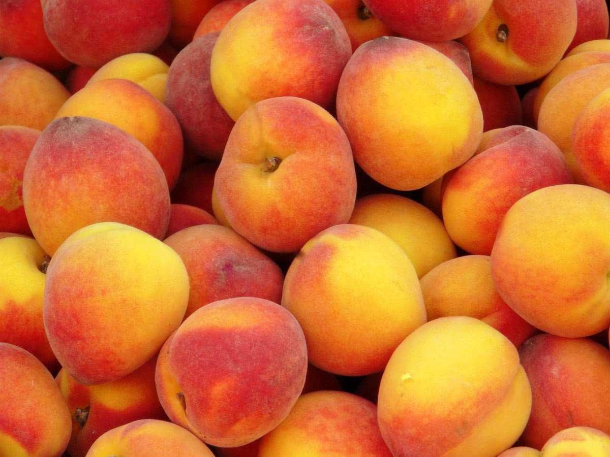 Персиковое вино в домашних условиях: рецепты простой, с дрожжами и без